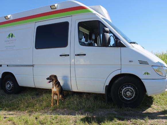 Schöner Hund vor der mobilen Tierarztpraxis