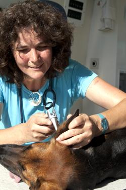 Untersuchung in der Mobilen Tierarztpraxis Dr. Katja Küther